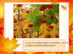В лесу в сентябре радует глаз рябина. За это и зовут сентябрь «рябинником».