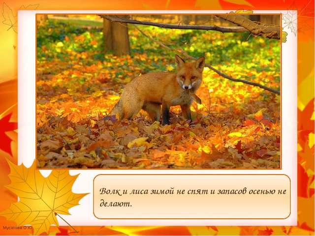 Волк и лиса зимой не спят и запасов осенью не делают. Мусатова О.Ю.
