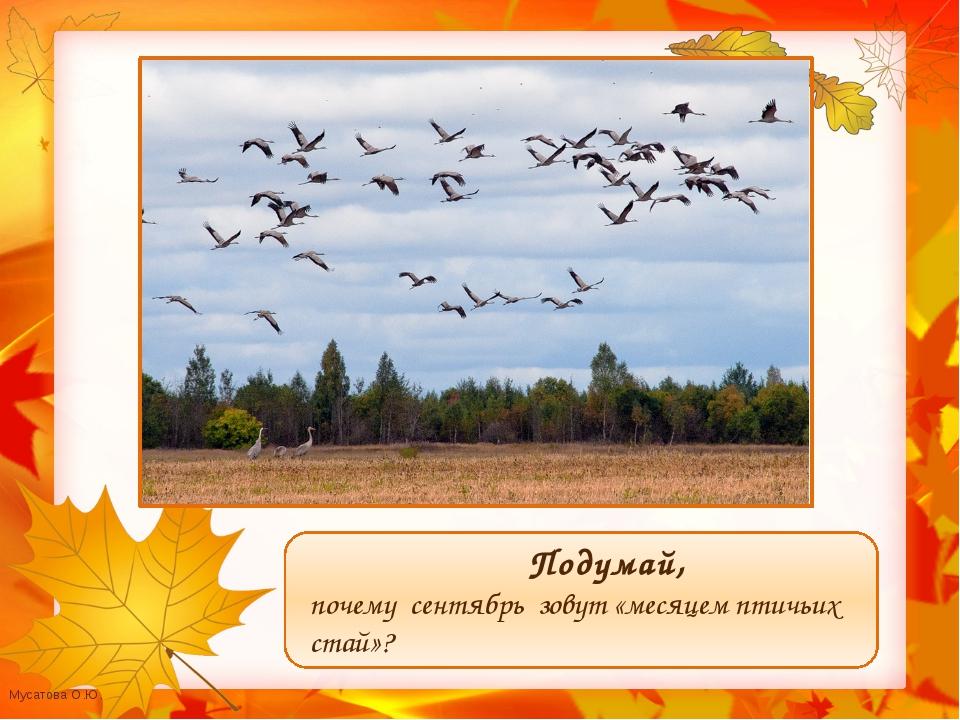 Подумай, почему сентябрь зовут «месяцем птичьих стай»? Мусатова О.Ю.