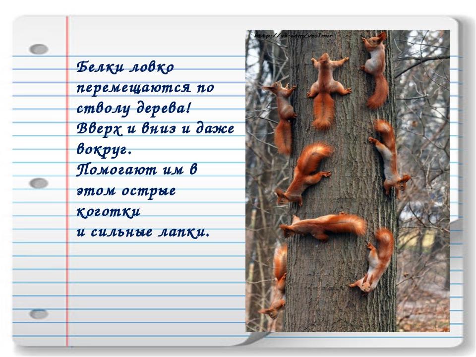 Белки ловко перемещаются по стволу дерева! Вверх и вниз и даже вокруг. Помога...