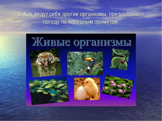 3. Как ведут себя другие организмы, предсказывая погоду по народным приметам.