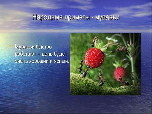 Народные приметы - муравьи Муравьи быстро работают – день будет очень хороший...