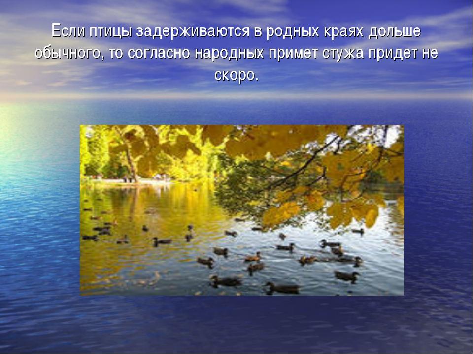Если птицы задерживаются в родных краях дольше обычного, то согласно народных...