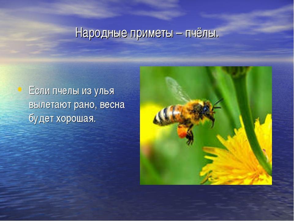 Народные приметы – пчёлы. Если пчелы из улья вылетают рано, весна будет хорош...