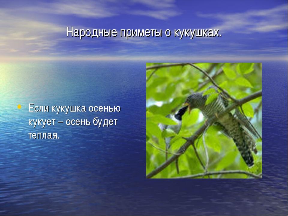 Народные приметы о кукушках. Если кукушка осенью кукует – осень будет теплая.