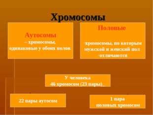 Хромосомы Аутосомы – хромосомы, одинаковые у обоих полов. Половые хромосомы,