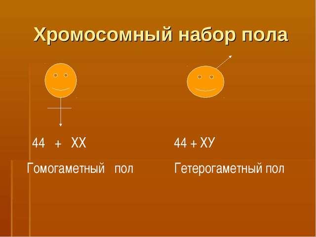 Хромосомный набор пола 44 + ХХ Гомогаметный пол 44 + ХУ Гетерогаметный пол