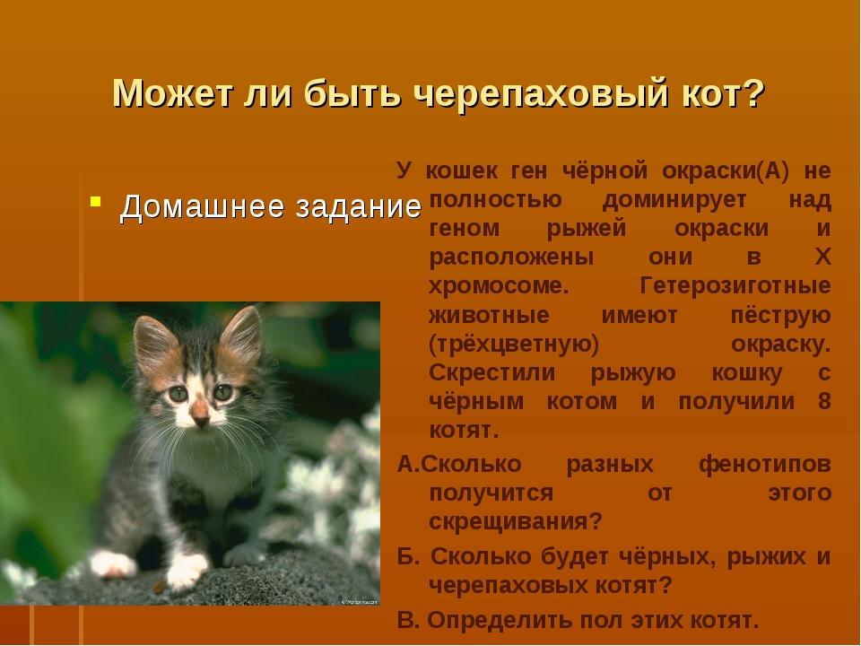 Может ли быть черепаховый кот? Домашнее задание У кошек ген чёрной окраски(А)...