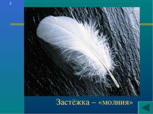 Застёжка – «молния» 2