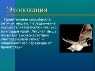 Эхолокация Удивительная способность летучих мышей. Передвижение осуществляетс