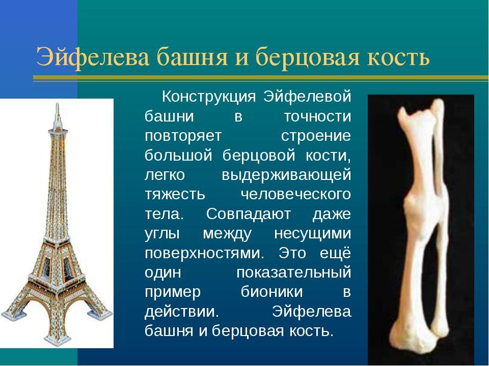 Эйфелева башня и берцовая кость Конструкция Эйфелевой башни в точности повтор...