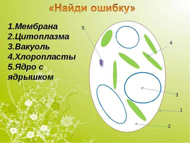 1.Мембрана 2.Цитоплазма 3.Вакуоль 4.Хлоропласты 5.Ядро с ядрышком 1 5 4 2 3
