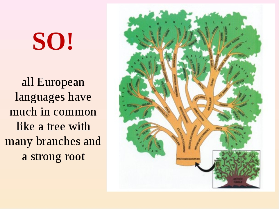 SO! all European languages have much in common like a tree with many branche...
