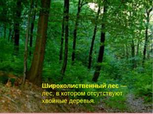 Широколиственный лес — лес, в котором отсутствуют хвойные деревья.