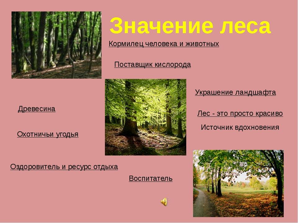 Значение леса Кормилец человека и животных Древесина Охотничьи угодья Поставщ...