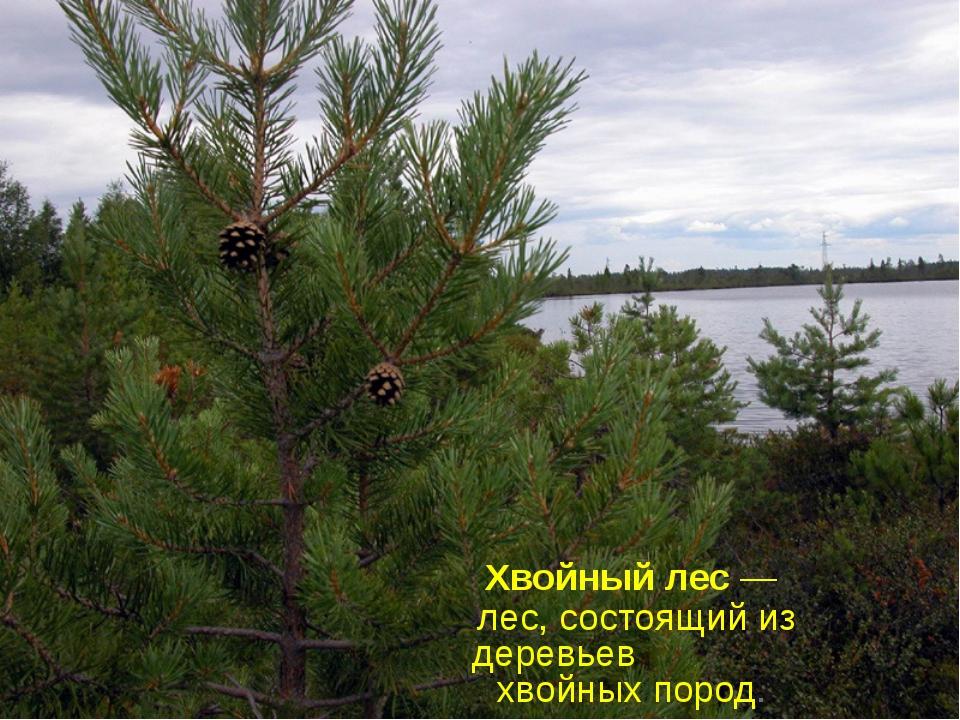 Хвойный лес — лес, состоящий из деревьев хвойных пород.