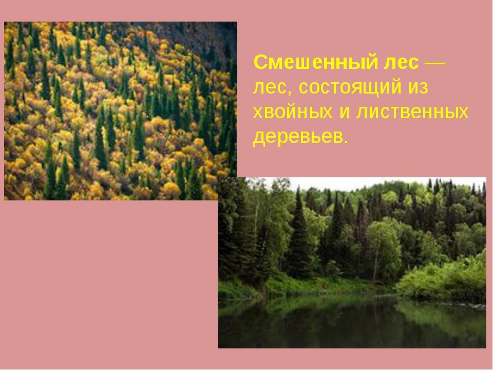 Смешенный лес — лес, состоящий из хвойных и лиственных деревьев.