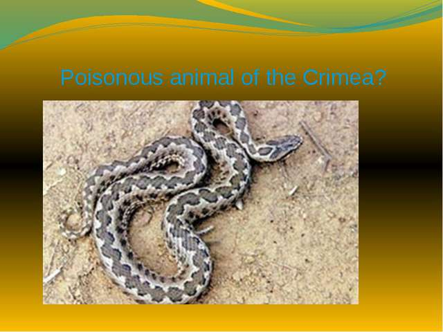 Poisonous animal of the Crimea?