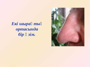 Адам мұрнымен иісті ажыратады және тыныс алады. Мұрын-иіс сезу мүшесі.
