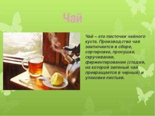 Чай – это листочки чайного куста. Производство чая заключается в сборе, сорти