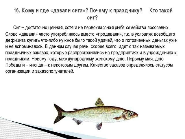 Сиг – достаточно ценная, хотя и не первоклассная рыба семейства лососевых. С...