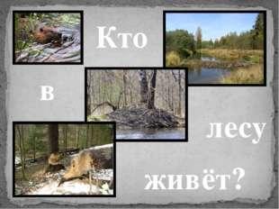 Кто в лесу живёт?