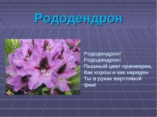 Рододендрон * Рододендрон! Рододендрон! Пышный цвет оранжереи, Как хорош и ка