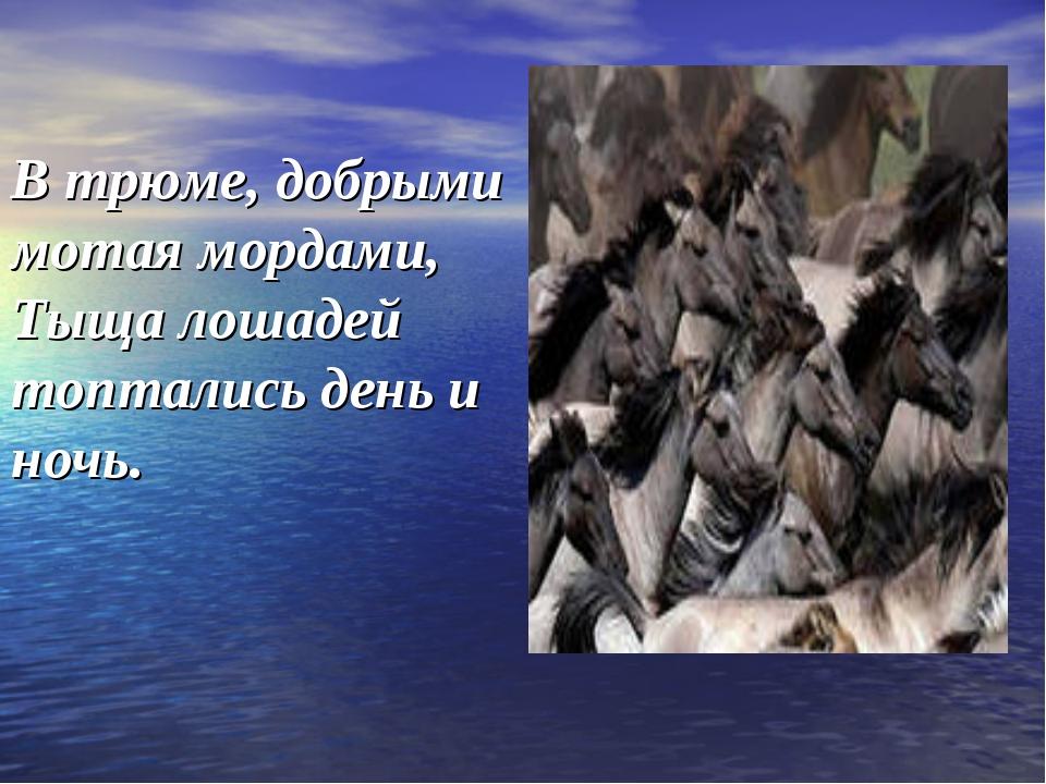 В трюме, добрыми мотая мордами, Тыща лошадей топтались день и ночь.