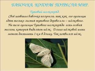 БАБОЧКА, КОТОРАЯ ПОТРЯСЛА МИР. Тутовый шелкопряд. Своё название бабочка получ