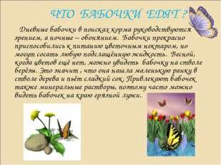 ЧТО БАБОЧКИ ЕДЯТ ? Дневные бабочки в поисках корма руководствуются зрением, а