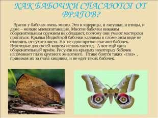 КАК БАБОЧКИ СПАСАЮТСЯ ОТ ВРАГОВ? Врагов у бабочек очень много. Это и ящерицы,