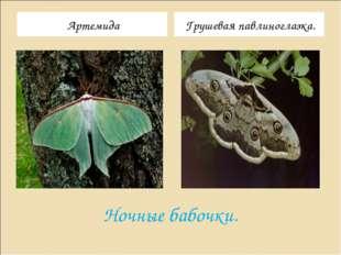 Ночные бабочки. Артемида Грушевая павлиноглазка.