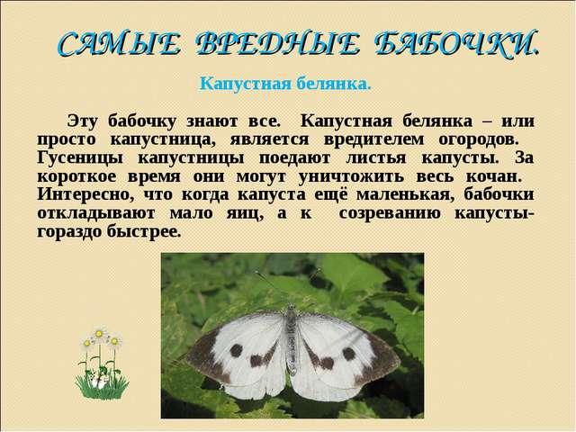 САМЫЕ ВРЕДНЫЕ БАБОЧКИ. Капустная белянка. Эту бабочку знают все. Капустная бе...
