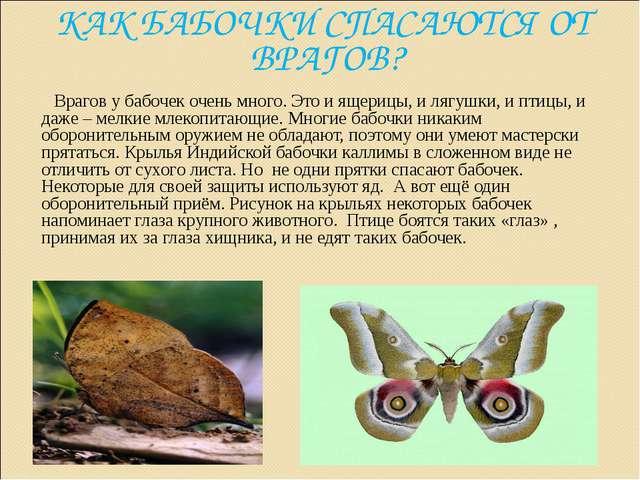 КАК БАБОЧКИ СПАСАЮТСЯ ОТ ВРАГОВ? Врагов у бабочек очень много. Это и ящерицы,...