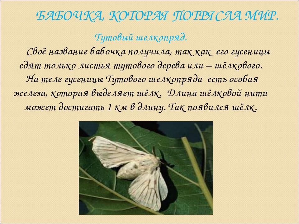 БАБОЧКА, КОТОРАЯ ПОТРЯСЛА МИР. Тутовый шелкопряд. Своё название бабочка получ...