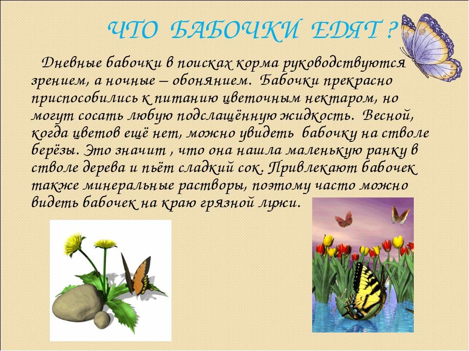 ЧТО БАБОЧКИ ЕДЯТ ? Дневные бабочки в поисках корма руководствуются зрением, а...