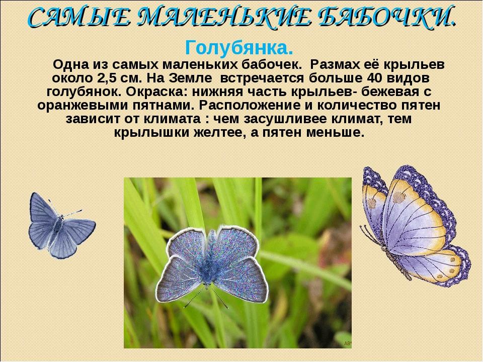 САМЫЕ МАЛЕНЬКИЕ БАБОЧКИ. Голубянка. Одна из самых маленьких бабочек. Размах е...