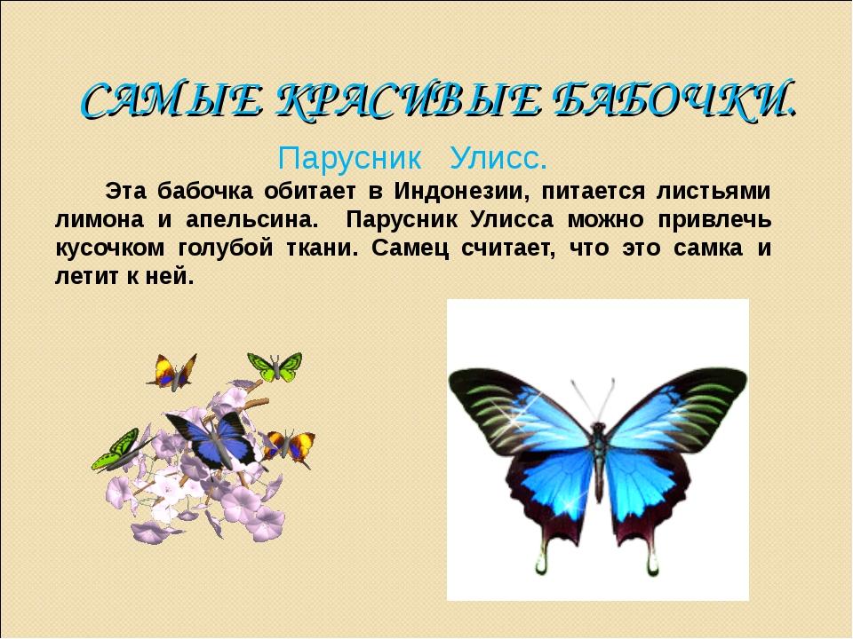 САМЫЕ КРАСИВЫЕ БАБОЧКИ. Парусник Улисс. Эта бабочка обитает в Индонезии, пита...
