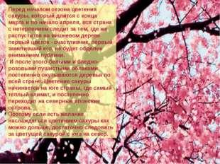 Перед началом сезона цветения сакуры, который длится с конца марта и по нача