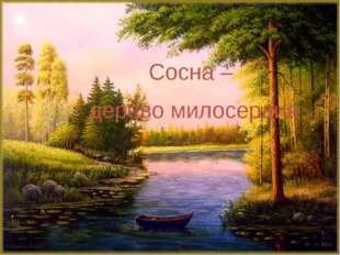 Сосна – дерево милосердия