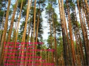 В лесу, где деревья растут близко друг от друга, их кроны тянутся ввысь к со