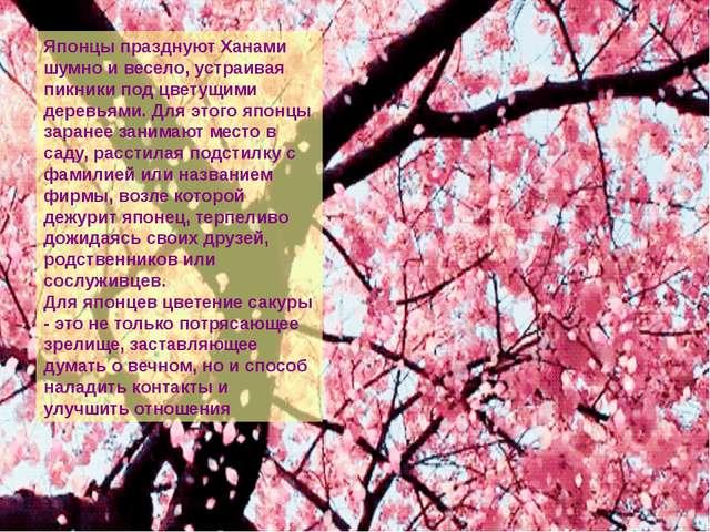 Японцы празднуют Ханами шумно и весело, устраивая пикники под цветущими дере...