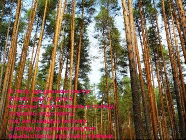 В лесу, где деревья растут близко друг от друга, их кроны тянутся ввысь к со...