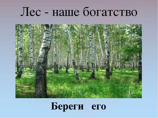 Лес - наше богатство Береги его {
