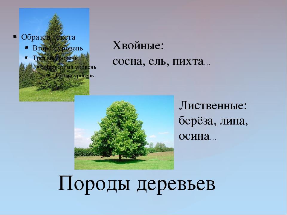 Породы деревьев Хвойные: сосна, ель, пихта… Лиственные: берёза, липа, осина…