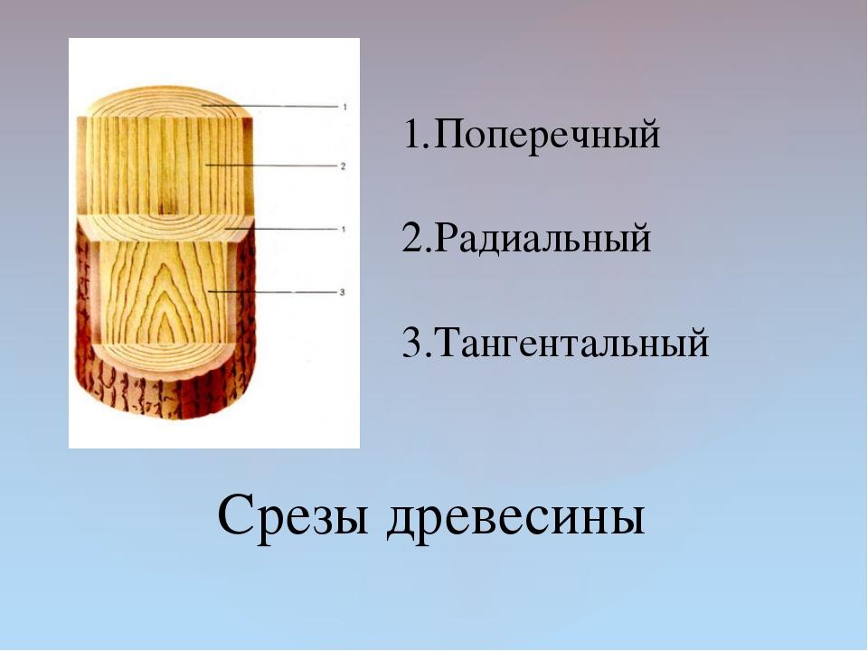 Срезы древесины Поперечный Радиальный Тангентальный