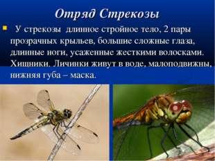 Отряд Стрекозы У стрекозы длинное стройное тело, 2 пары прозрачных крыльев, б