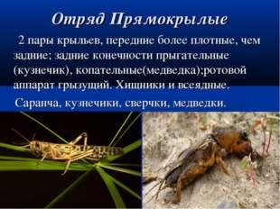Отряд Прямокрылые 2 пары крыльев, передние более плотные, чем задние; задние