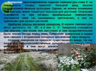 Заморозки (кратковременное падение температуры ниже 0° на поверхности почвы)