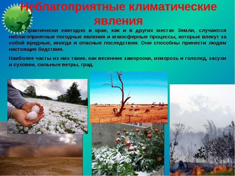 Неблагоприятные климатические явления Практически ежегодно в крае, как и в др...